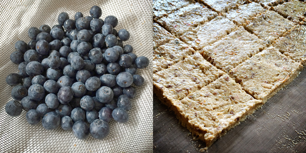 blueberries & seed crackers for dehydrator {wholly rooted}