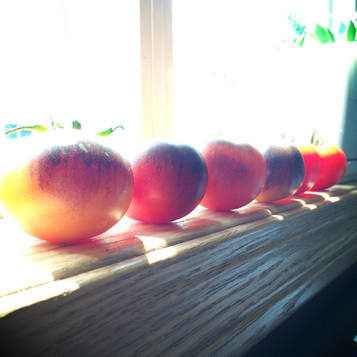 windowsill ripening {wholly rooted}